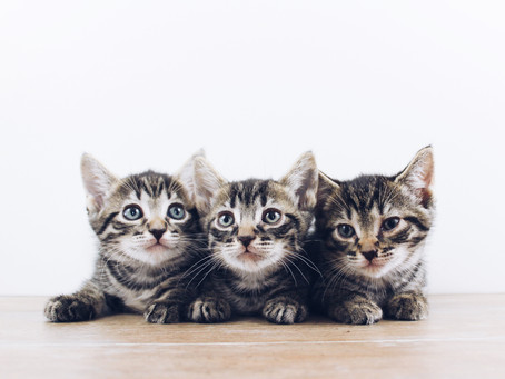 Why should you desex your cat by four months of age?