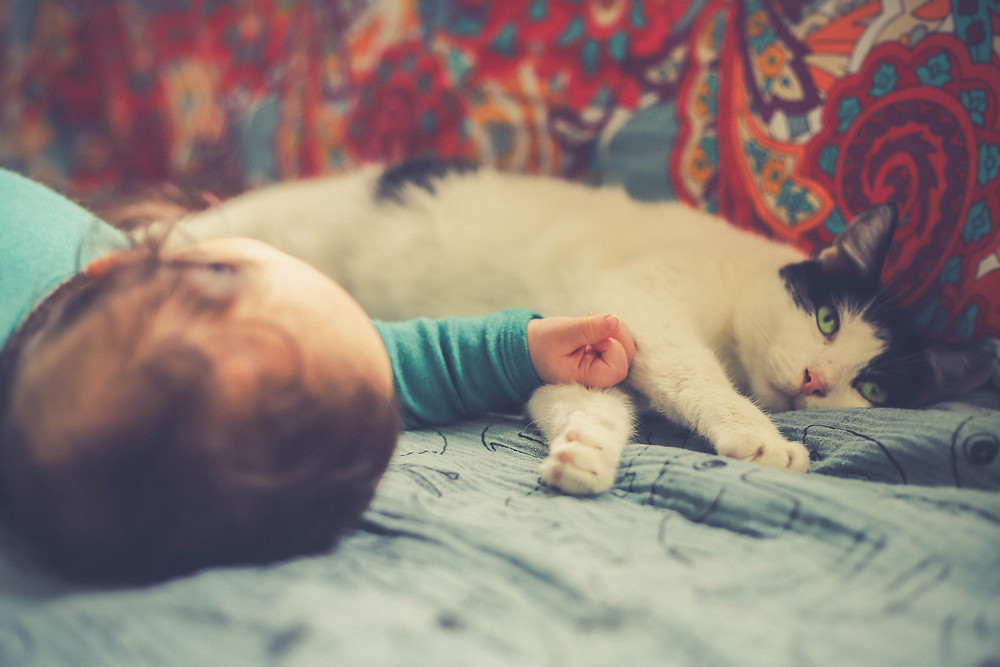 Cat with baby - TassieCat