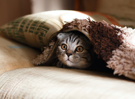 Transitioning Your Cat To An Indoor Lifestyle