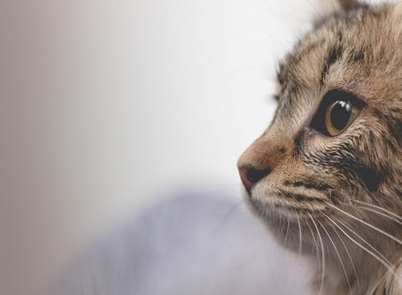 Common Vaccines For Cats & Why They're Important