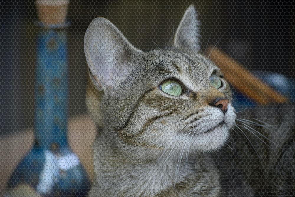 Cat behind screen door - TassieCat