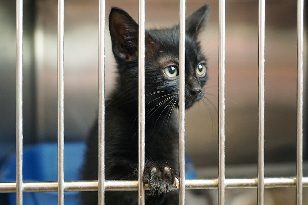 Kitten in a cat carrier - TassieCat