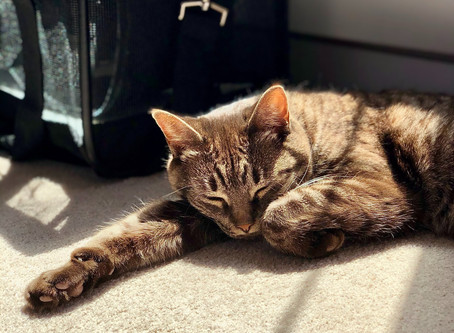 9 Steps To Train Your Cat To Love Their Carrier + Car Travel