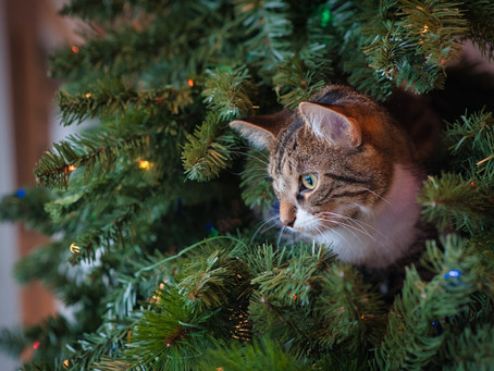 Keeping You & Your Cat Happy This Christmas