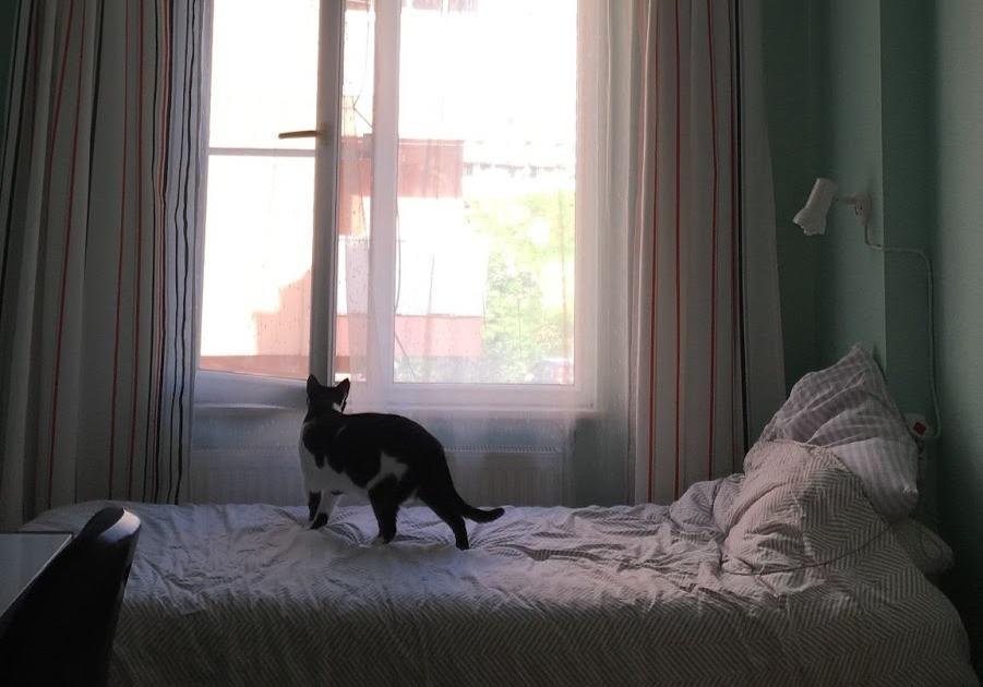 Cat at open window - TassieCat