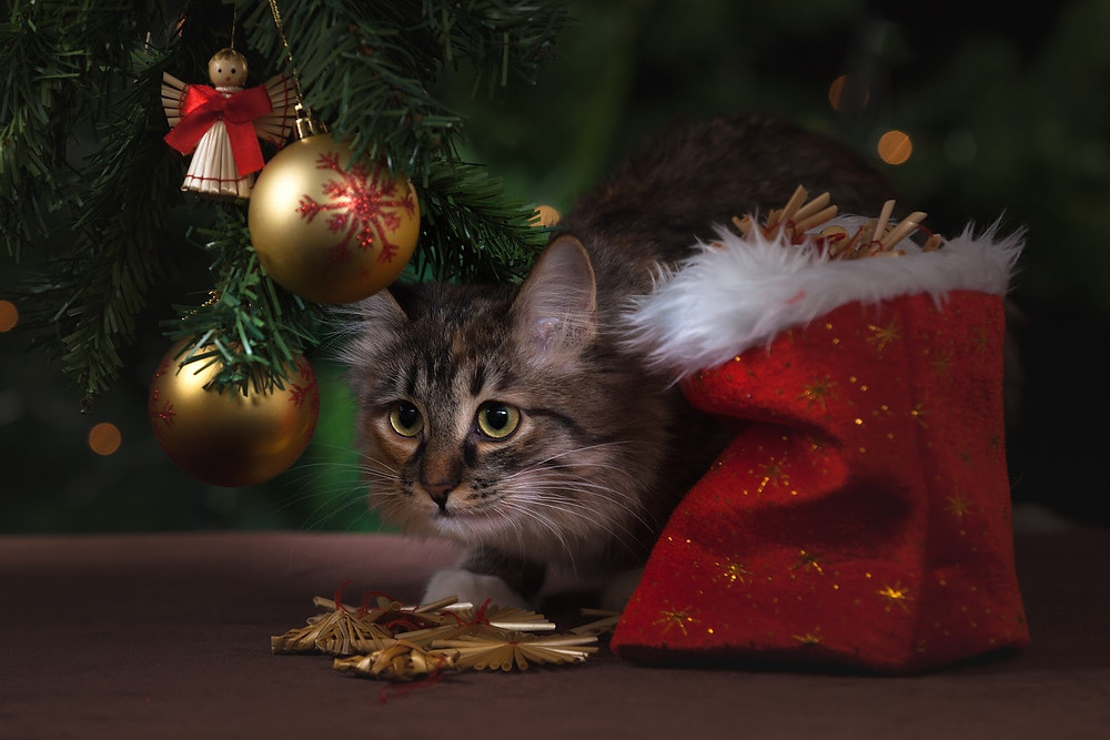 Cat under the Christmas tree - TassieCat