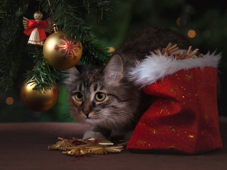 Should You Buy a Kitten For a Christmas Gift?