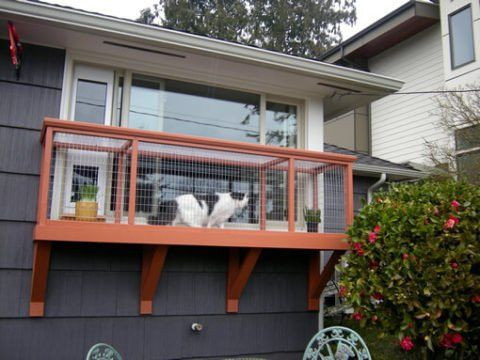 Window box for cat - TassieCat