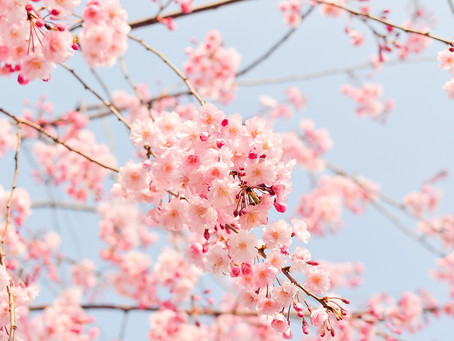 Spring fever – how you can best prepare for and manage your family's health this spring