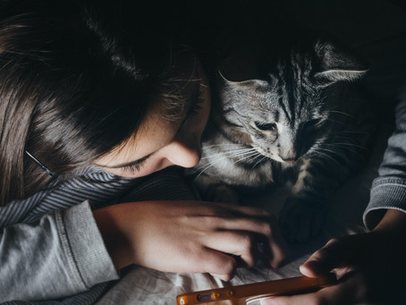 What are the dangers of buying a kitten online?