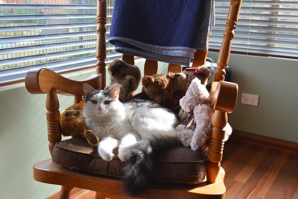 Cat in a chair - TassieCat