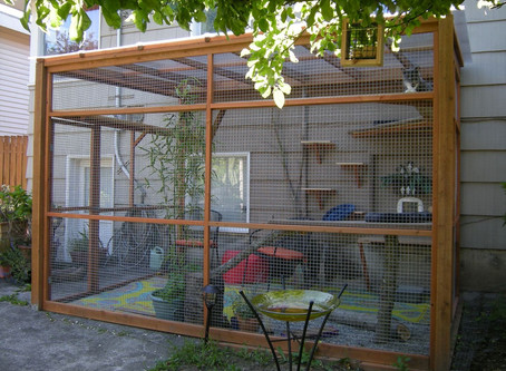 Building the Purrfect Outdoor Catio!
