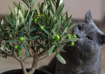 Cat and plant - TassieCat