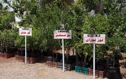 Oliveira na Tunísia