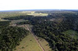 AMAZÔNIA PERMACULTURA