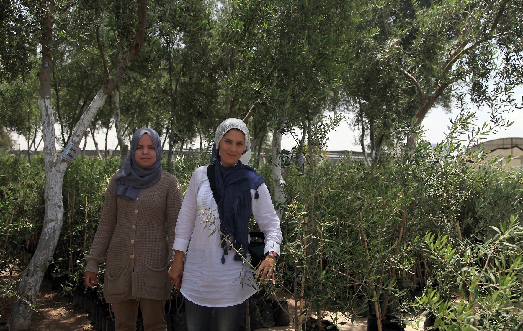 Oliveiras na Tunísia
