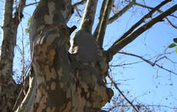 Cura da Árvore