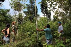 Agroflorestas Amazônicas