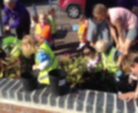 RHS Plant chil 1.jpg