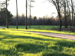 Photo of open green space