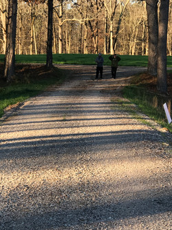 Photo of Walking Trail