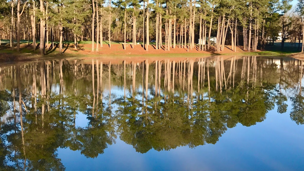 Spring Awakens at Pleasant Run Creek Park