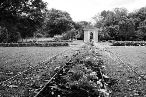 Black and white photo of garden area with gazebo in background