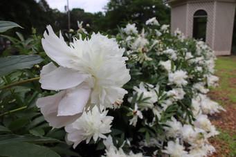 Photo of flowers