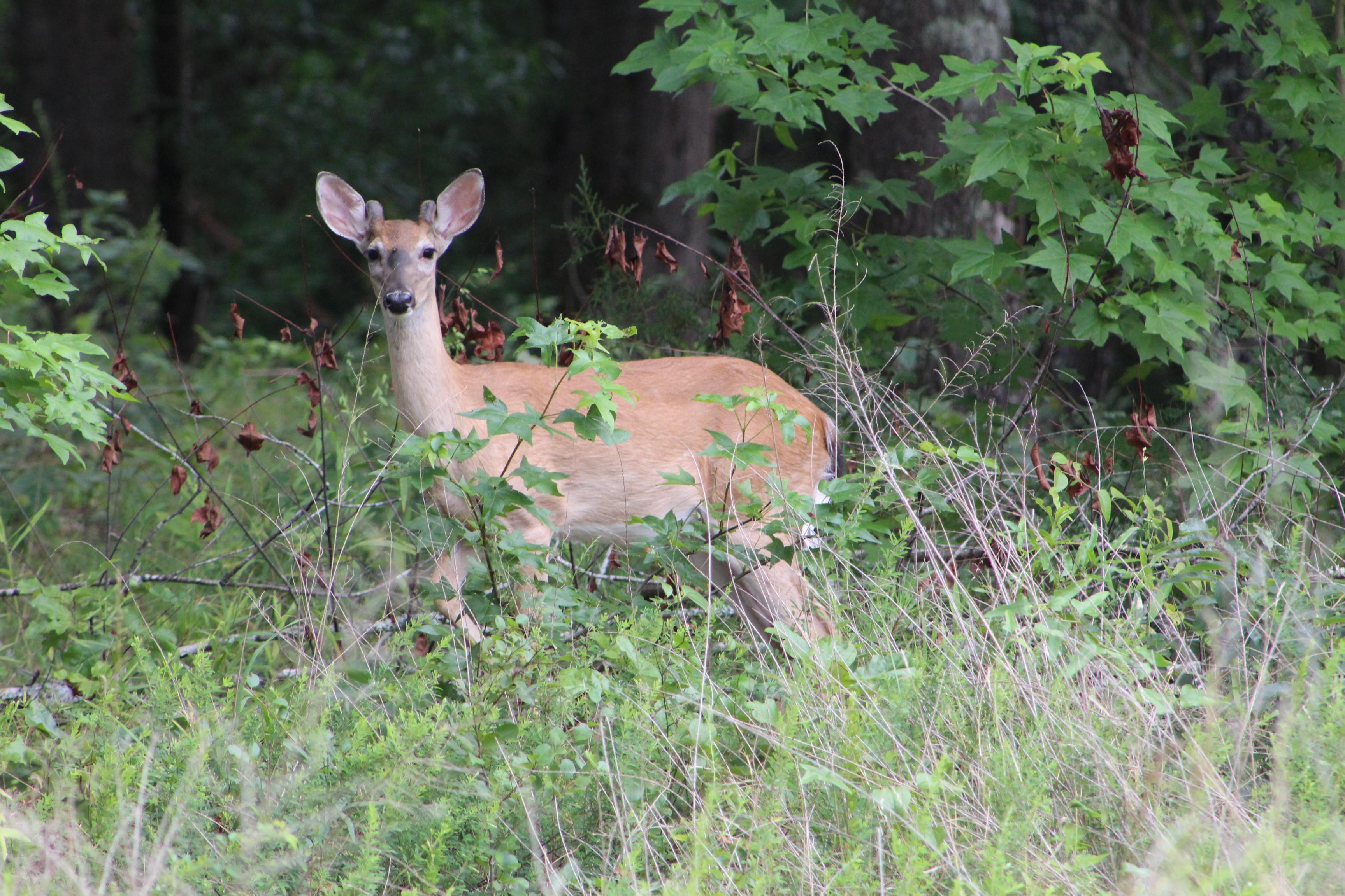 Photo of deer in park