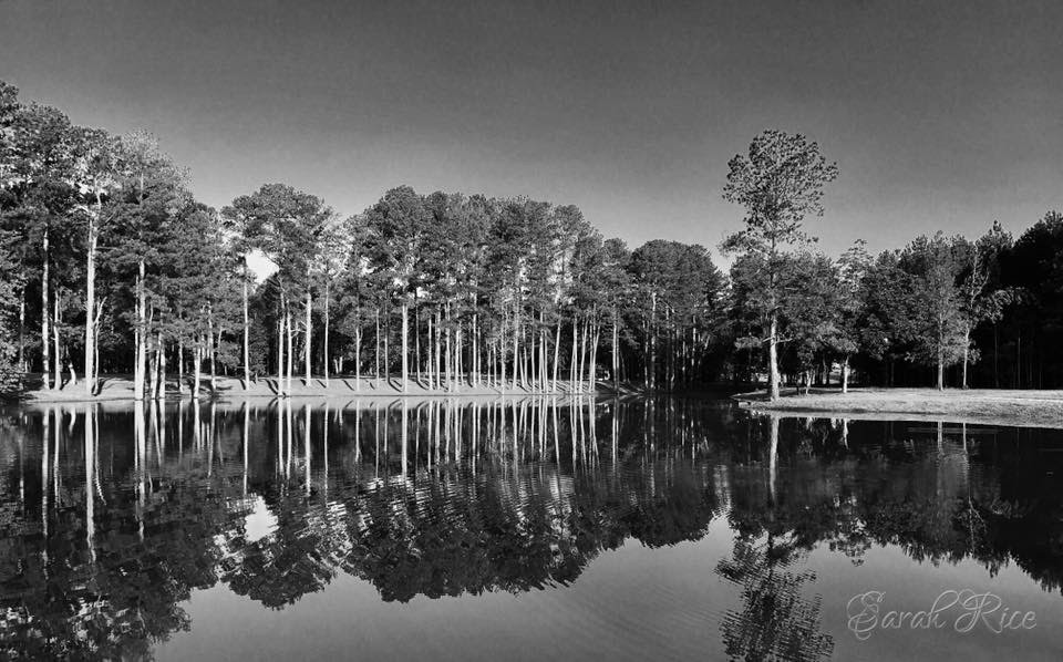 Pond in Black and White