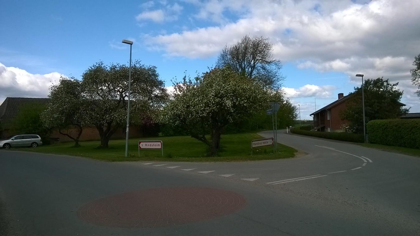 Gamle æbletræer i Sdr. Rind