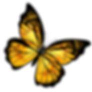Yellow-Butterfly-PNG.png