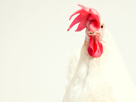 How we can be beasts and chickens are not