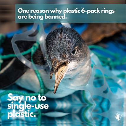 One Reason for Plastic Ban.png