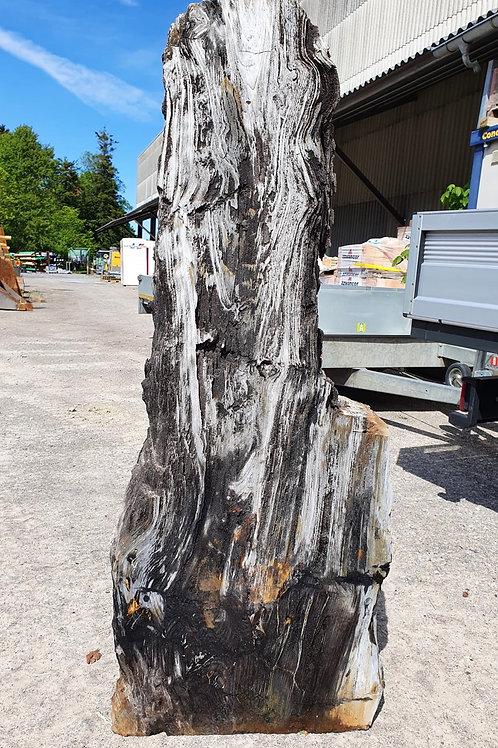 Versteinertes Holz   155 x 60 x 16cm