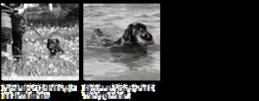 Jagdhunde Fotogruppe Website.png