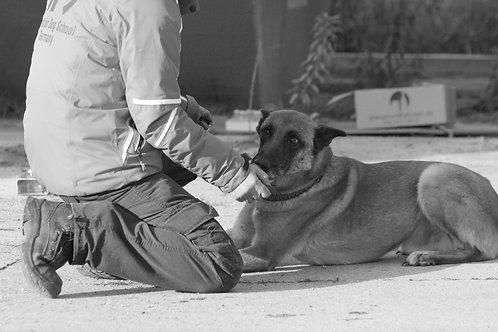 Sprengstoff & Pyrospürhund 3 Tage-Seminar