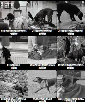 Spürhunde Fotogruppe Website.png