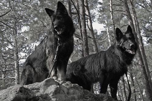 ALB 3 Tage-Seminar Anoplophoraspürhunde