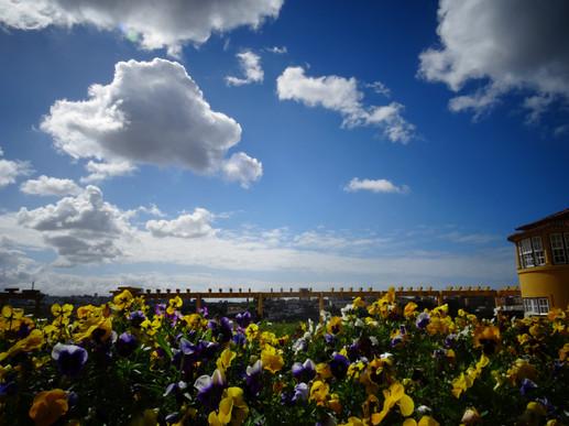 ciel et fleurs jaune et violette.JPG