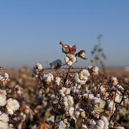 Le Bio dans l'industrie textile