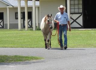 Let's Talk Horses