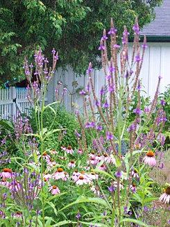 Greenwood Botanicals|Registered Herbalist
