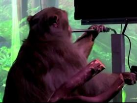 Neuralink: la startup dei chip celebrali di Elon Musk, fa giocare un macaco a Pong.