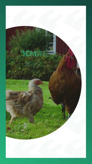 Farmway 02 Insta - Dalis.mp4