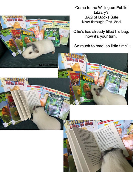 jpeg Ollie at the Book Sale.jpg