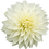 Thumbnail: Dahlia, 'Fleurel'