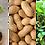 Thumbnail: Jordnöt, Arachis hypogaea