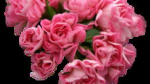 Pelargonium 'Australian Pink Rambler'