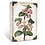 Thumbnail: Sid Dickens 'Apple Blossoms' T462